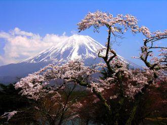 paisaje árboles rosa con fondo de montaña